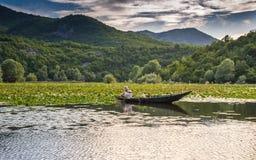 Pêche dans le lac Skadar image libre de droits
