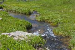 Pêche dans les montagnes de mouflon d'Amérique Photo stock