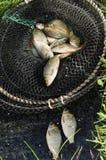 Pêche de carpe dans la cage Images libres de droits