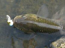 Pêche de chabot sur le lac Images libres de droits