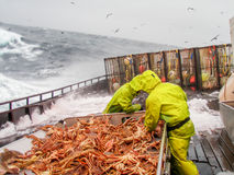Pêche de crabe de neige (bairdi de Chionoecetes) en Alaska Image libre de droits