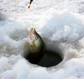 Pêche de glace de crapet Photographie stock