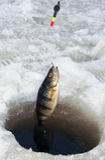 Pêche de glace de perche Photos libres de droits