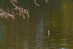 Pêche de l'attrait accrochant sur la ligne de pêche Image libre de droits
