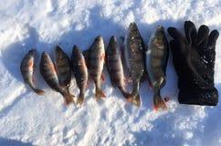 Pêche de l'hiver Pêche de l'hiver Photo stock