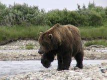 Pêche de l'ours Photographie stock