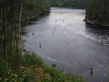Pêche de mouche dans le fleuve Image stock