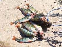 Pêche de rotation Photos libres de droits