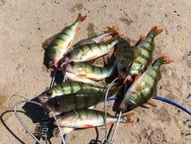 Pêche de rotation Photo libre de droits