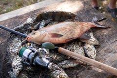 Pêche de trophée Grands poissons communs d'eau douce de brème et canne à pêche avec la bobine sur l'épuisette images stock