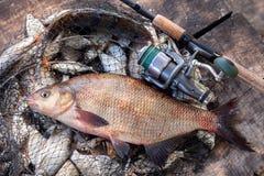 Pêche de trophée Grands poissons communs d'eau douce de brème et canne à pêche avec la bobine sur l'épuisette photos libres de droits