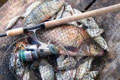 Pêche de trophée Poissons de brème d'eau douce et brème argentée dans l'épuisette avec le crochet de pêche dans lui et la canne à photographie stock