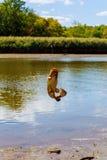 pêche du poisson-chat attrapé Image stock