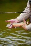 pêche du truite arc-en-ciel de mouche Photographie stock