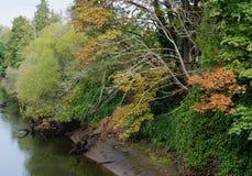 Pêche le long de la rivière de Duwamish Photos stock