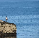 Pêche maritime sur des roches Photos stock