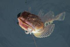 Pêche réussie Photos libres de droits