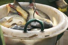 Pêche sur le lac Photo libre de droits
