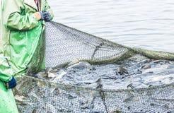 Pêche sur le lac L'homme tire un filet de poissons photos libres de droits