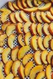 Pêches sèches dans un dessiccateur de déshydrateur Une manière de préserver des vitamines images libres de droits
