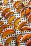 Pêches sèches dans un dessiccateur de déshydrateur Une manière de préserver des vitamines photo stock