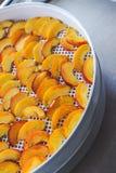 Pêches sèches dans un dessiccateur de déshydrateur Une manière de préserver des vitamines images stock