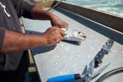Pêcheur étripant et nettoyant un poisson photos stock