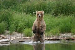 pêcheur d'ours Photo libre de droits