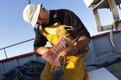 Pêcheur de homard avec la capture Photographie stock