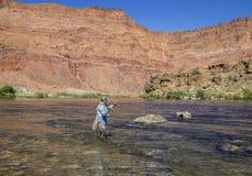Pêcheur solitaire de mouche sur le fleuve Colorado près du ferry de Lees, Arizon image stock