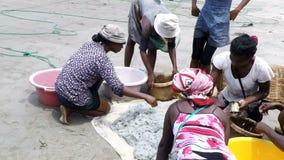 Pêcheurs indigènes pêchant sur la mer, femme sélectionnant les poissons catched banque de vidéos