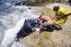 Pêcheurs, Lamalera Photos stock