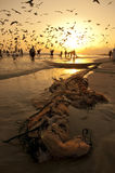 Pêcheurs omanais Images stock