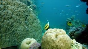 Pêchez, l'eau du fond, la vie sous l'eau banque de vidéos