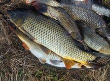 pêchez la carpe en ressort de Pâques de fond de filet de poissons photo libre de droits
