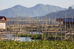 Pêchez les établissements d'incubation, lac Tondano, Sulawesi, Indonésie Images stock