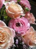 Pêssego & cor-de-rosa Fotos de Stock Royalty Free