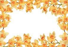 Pêssego e orquídeas alaranjadas em um fundo branco Fotos de Stock Royalty Free