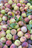 pêssegos Imagem de Stock Royalty Free