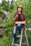 Pêssegos da colheita da mulher Fotos de Stock Royalty Free