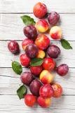Pêssegos e ameixas maduros frescos Fotos de Stock Royalty Free