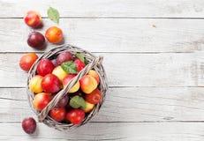 Pêssegos maduros frescos Fotos de Stock