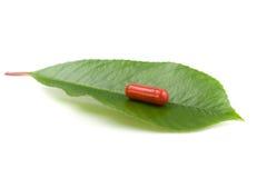 Píldora roja sobre una hoja verde Fotografía de archivo
