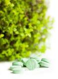 Píldoras de la medicina herbaria con la planta verde Imágenes de archivo libres de regalías