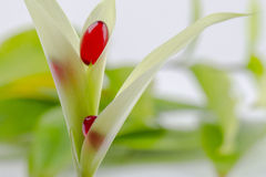 Píldoras rojas encima de las hojas Foto de archivo libre de regalías