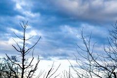 Półmrok - chmurni nieba z drzewnymi sylwetkami obrazy stock