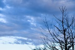 Półmrok - chmurni nieba z drzewnymi sylwetkami zdjęcie royalty free