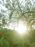 Półmrok między migdałowymi drzewami fotografia royalty free