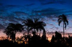 Półmrok palmy fotografia stock