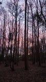 Półmrok w lesie zdjęcie stock